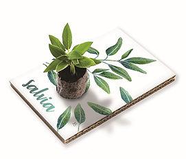 Cartolina Salvia