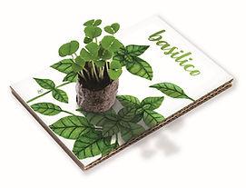 Cartolina Basilico