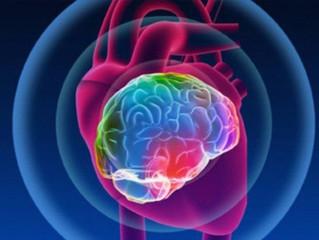 Heart-Brain Synchronization