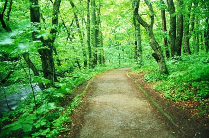 worn-hiking-path