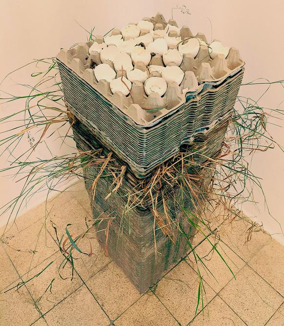 אגרטל-תבניות ביצים-אדמה  2021