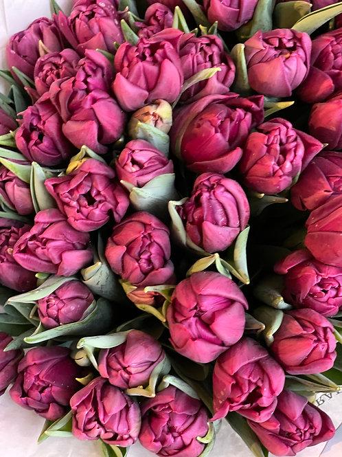 Alison Brady Tulips