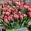 Thumbnail: Red Double Tulips