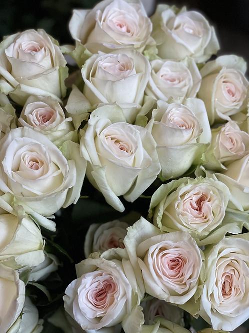 White Scented O'Hara Roses