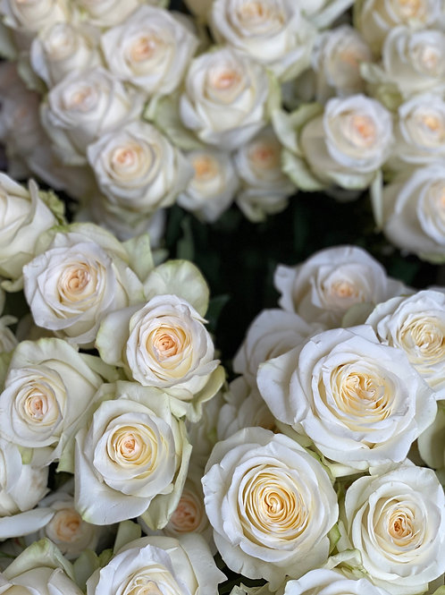 Candlelight Roses