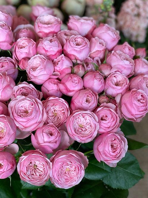 Pink Mansfield Park Spray Roses