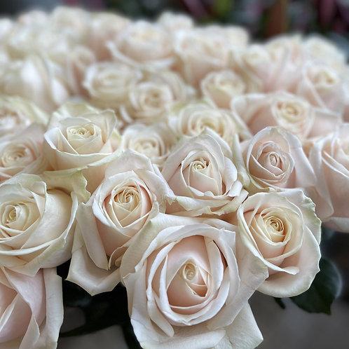 Dorchester Roses
