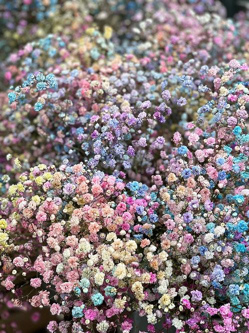 Rainbow Gypsophila