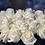 Thumbnail: White Avalanche Roses