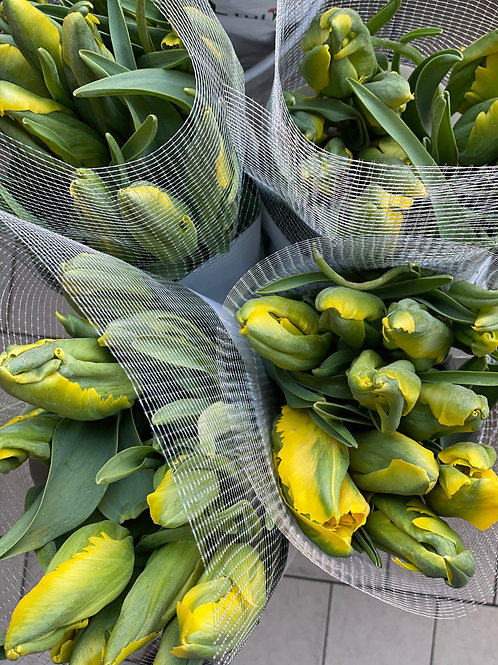 Yellow French Tulips