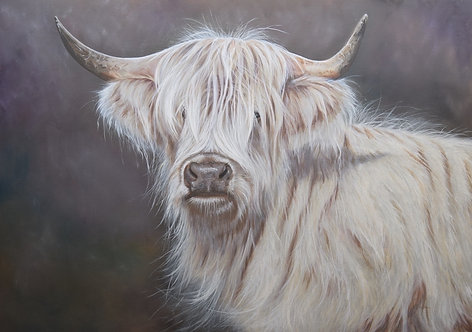 White Highlander by Nicola Colbran