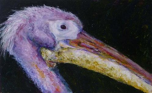Pelican by Diane Bailey