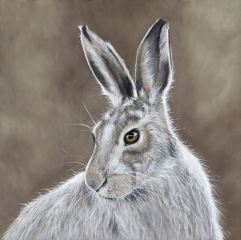 Mountain Hare by Nicola Colbran