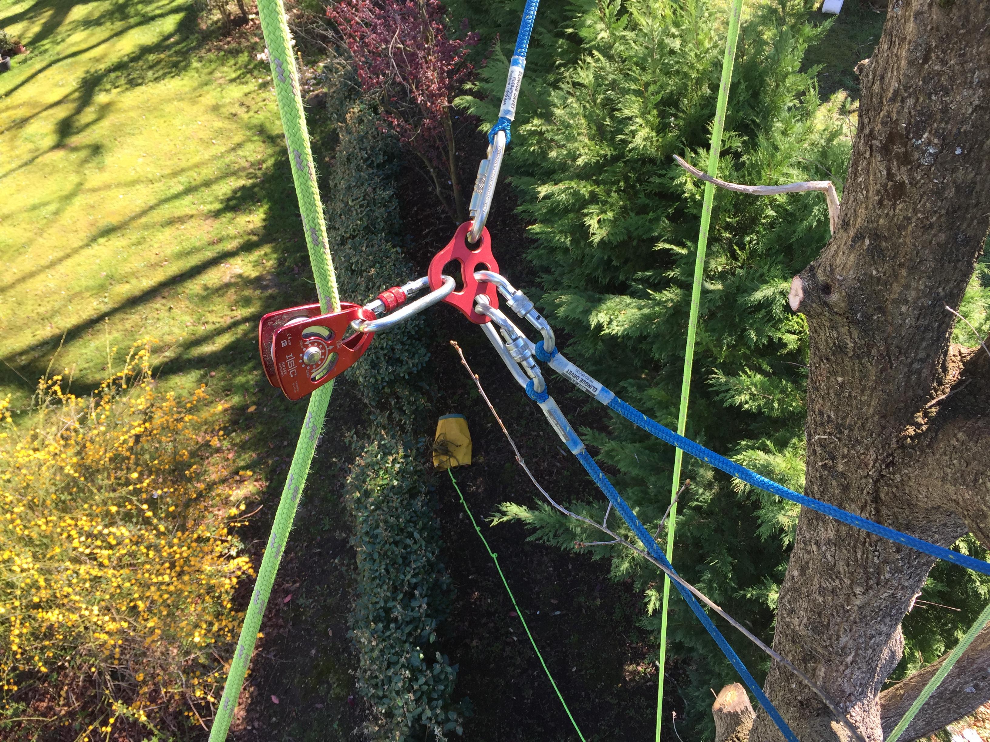 abattage arbre pau