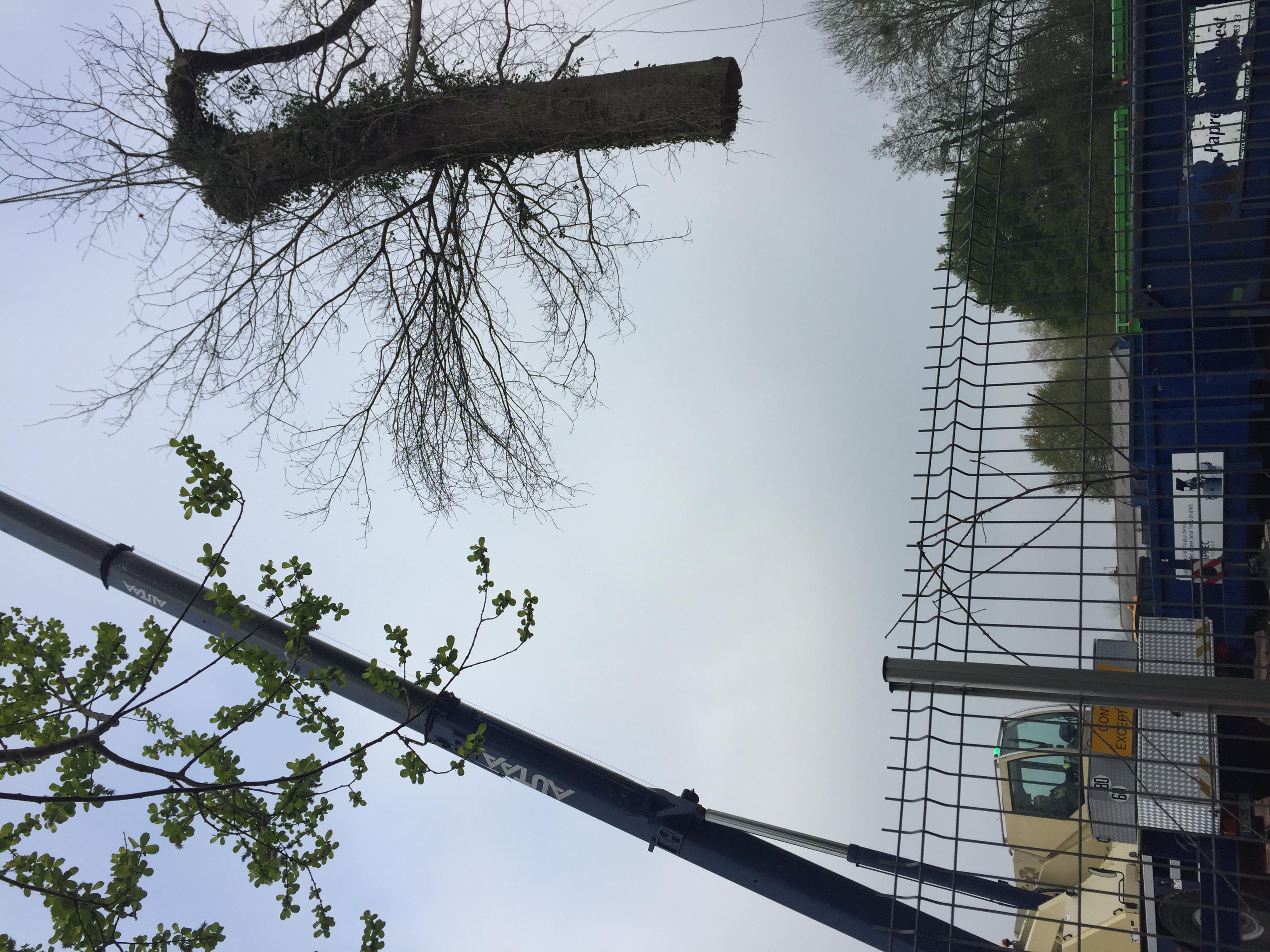 abattage arbre grue serres castet