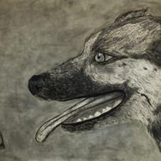 Bugatti the Dog