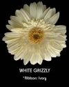 White w/ Yellow Gerbera
