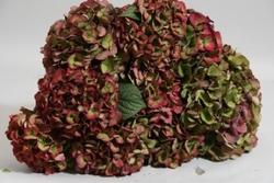 Red (Antique) Hydrangea