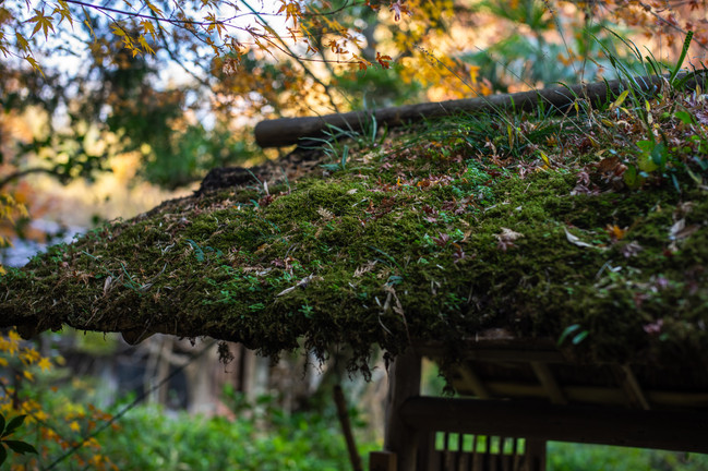 Signature Moss Gate at Houan Tea House