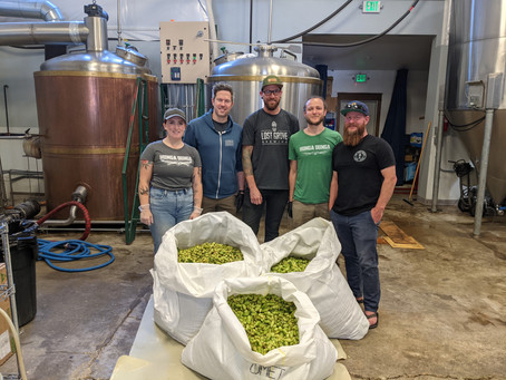 Say 'hello' to fare(well), our new fresh hop beer