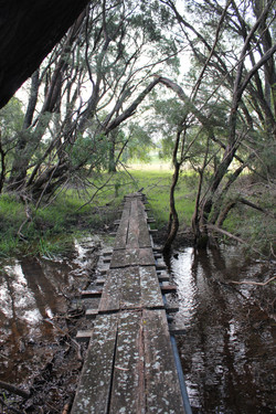 The winter creek
