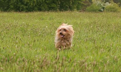 Dog_Photographter Kilkenny