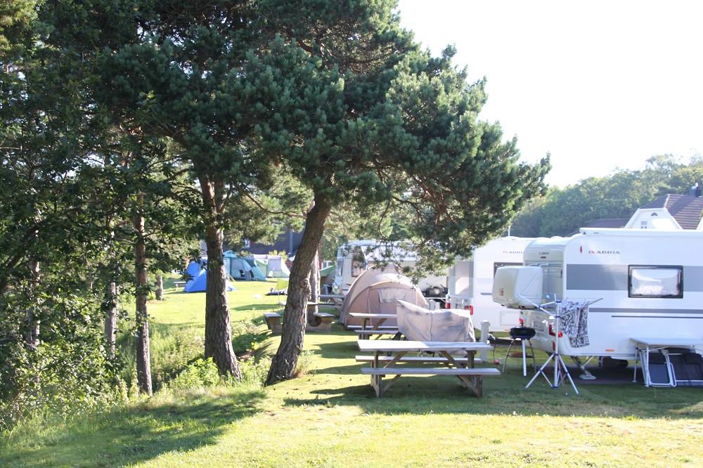 Camping-B-felt05.jpg