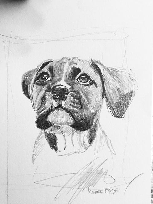 A5 pet sketch