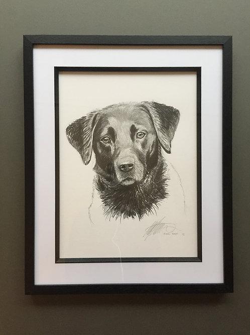A3 pet sketch
