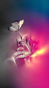 butterflies-1011195_1280.jpg