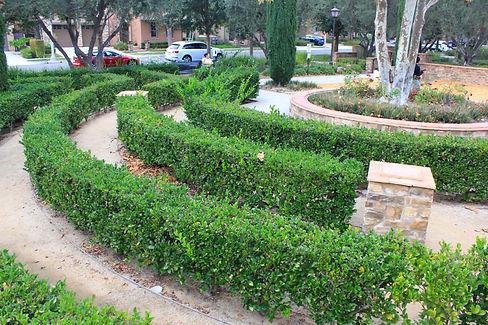 Woodbury Irvine Olive Grove Park_edited.jpg