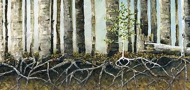 Aspen-Roots-5.jpg