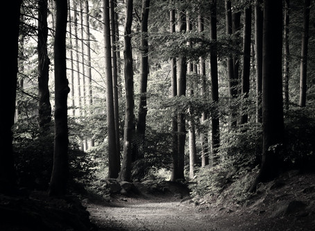 The Wilderness of Lent