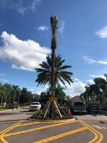 Large Palm.jpg