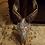 Thumbnail: Anna The Antelope