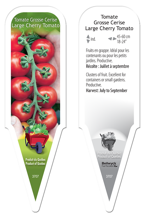 tomate cerise Grosse Cerise