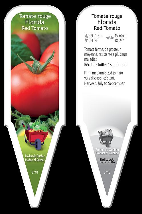 tomate hybride Florida