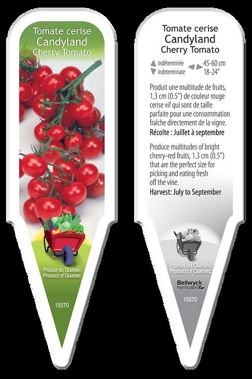 tomate cerise Candyland