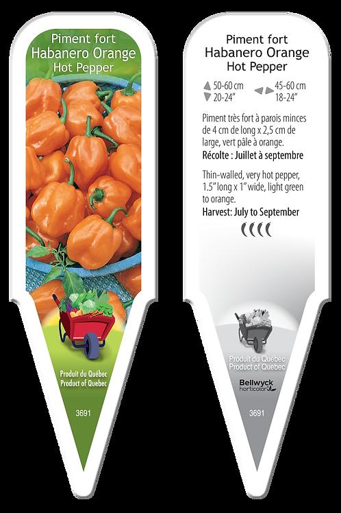 piment Habanero orange