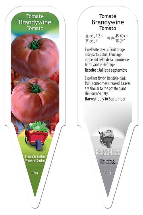 tomate ancestrale Brandywine