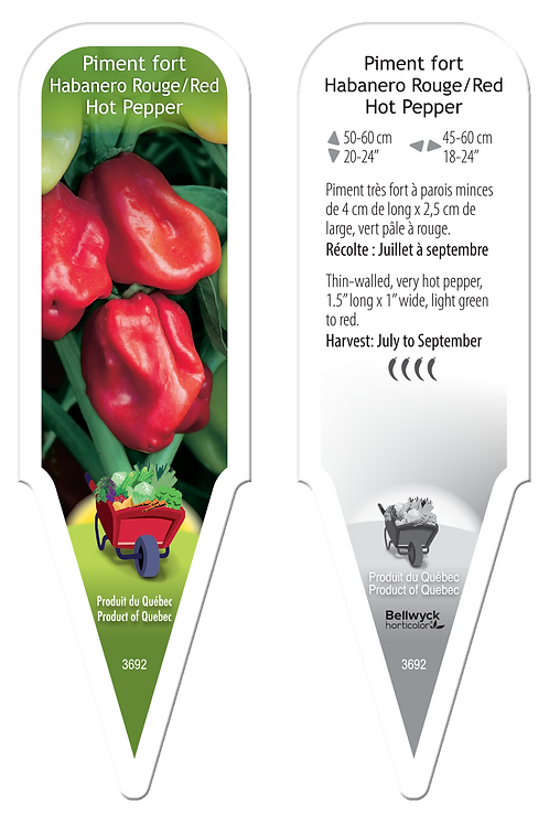 piment Habanero rouge