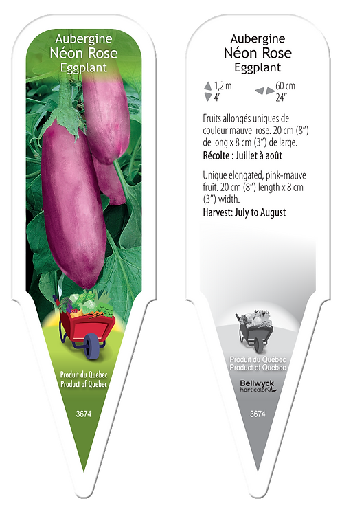 aubergine néon