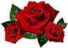 Red_Roses_PNG_Clipart_Picture.png