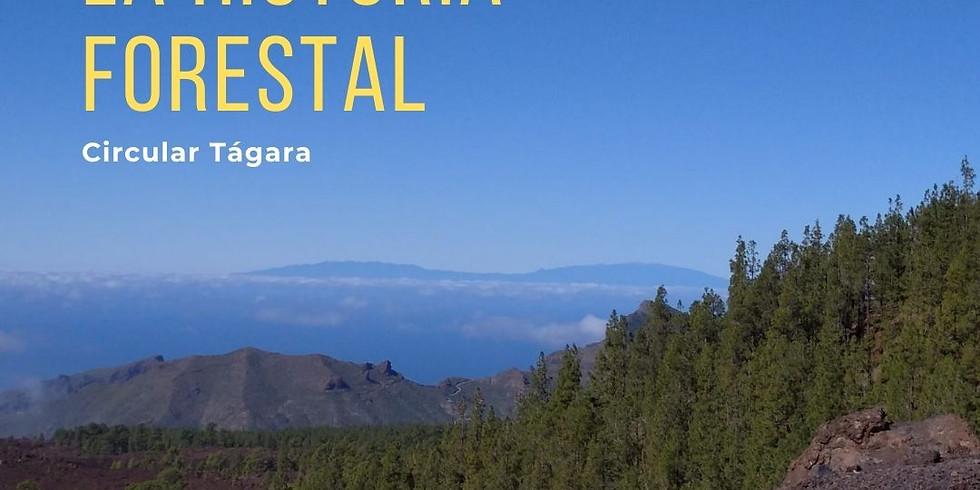 """Proyecto de promoción del patrimonio de Guía de Isora. Ruta: La Historia Forestal """"Circular de Tágara"""""""