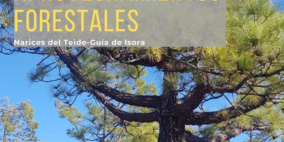"""Proyecto de promoción del Patrimonio de Guía de Isora: Ruta """"Aprovechamientos forestales"""""""""""