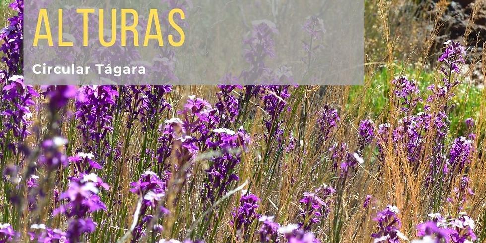 """Proyecto de promoción del Patrimonio de Guía de Isora: Ruta """"Florecer en las alturas"""""""