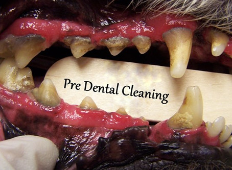 DID YOU KNOW...80% of dogs suffer from gum disease?