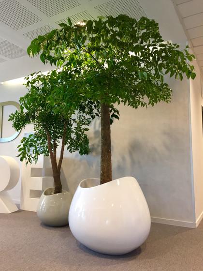 Amarylice - Plantes bureaux lyon