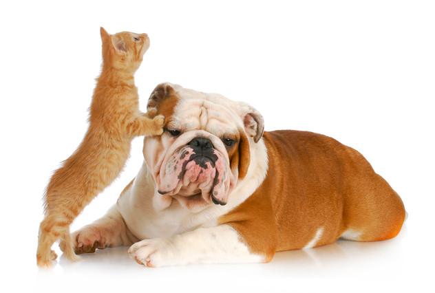 כלבים וחתולים - אהבה או שנאה?