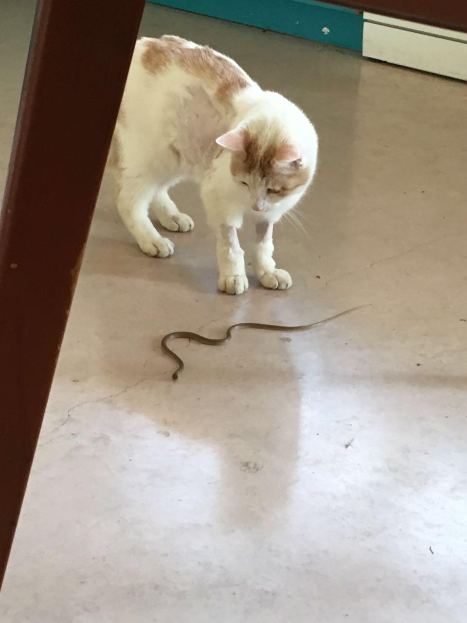 חתול שהתאושש מטיפול